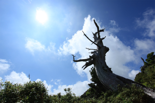 09白骨樹