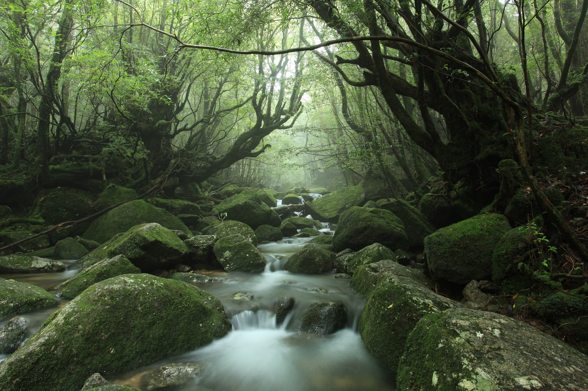 屋久島の画像 p1_30