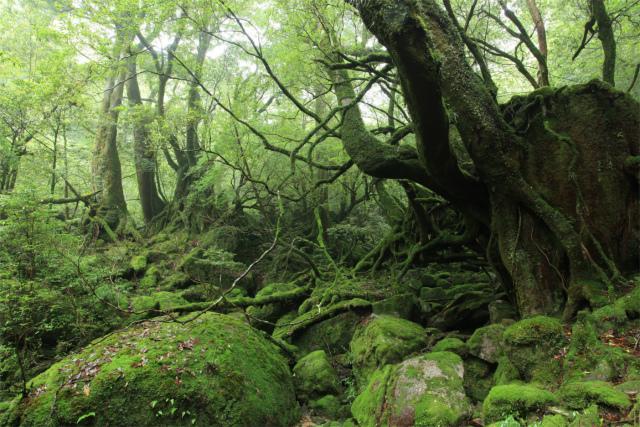 10苔むす森